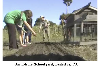 Garden at ML King MS, Berkeley, CA
